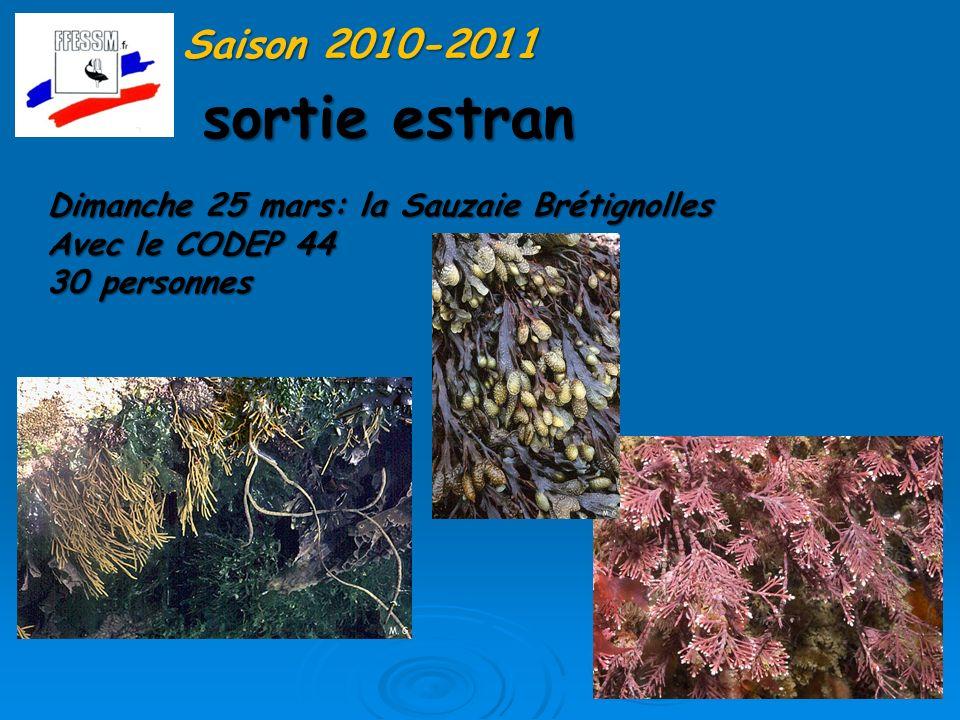 Saison 2010-2011 sortie estran. Dimanche 25 mars: la Sauzaie Brétignolles.