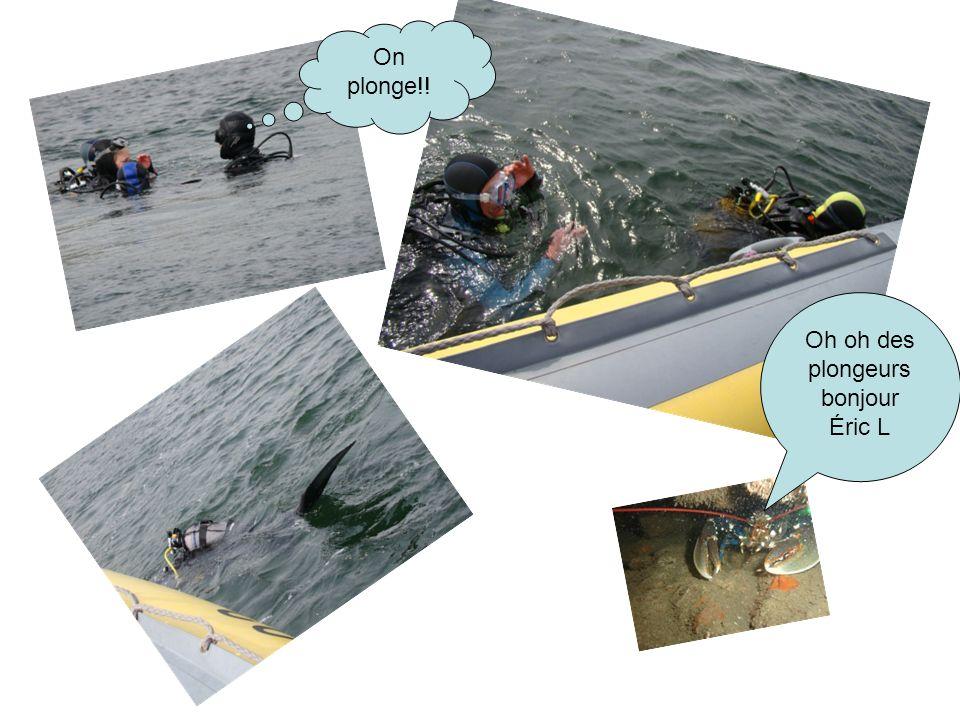 Oh oh des plongeurs bonjour Éric L