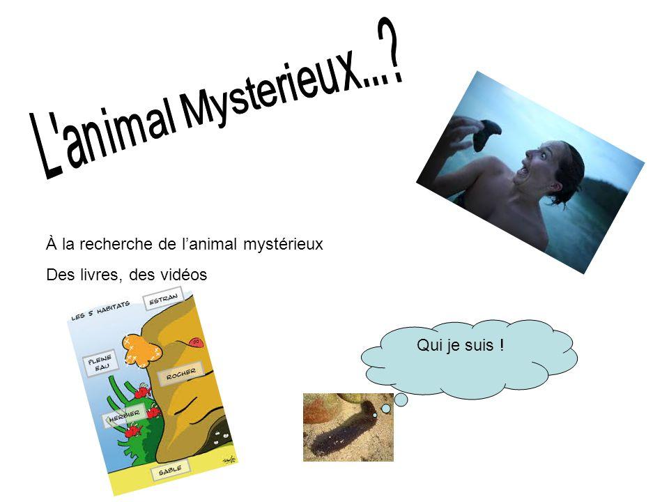 À la recherche de l'animal mystérieux Des livres, des vidéos