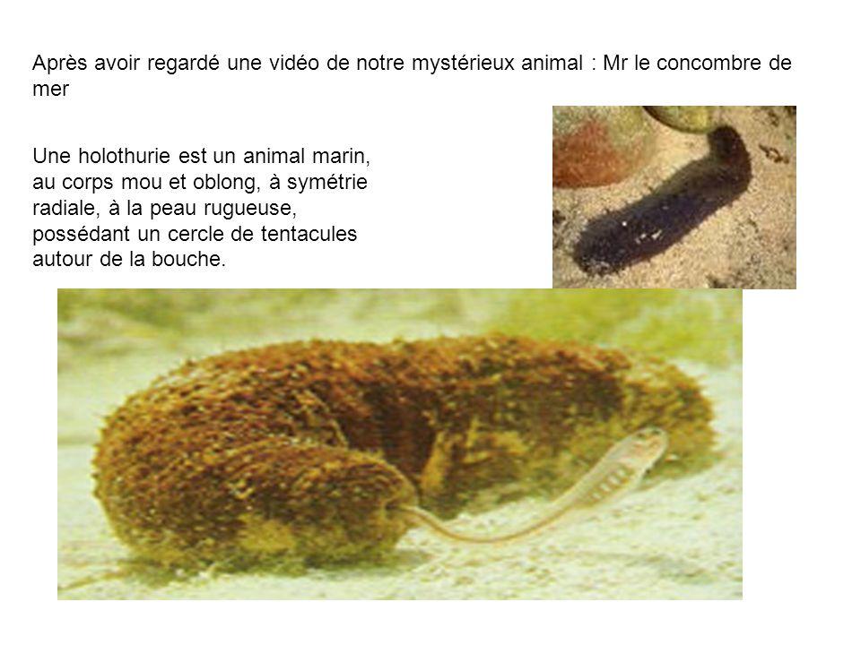 Après avoir regardé une vidéo de notre mystérieux animal : Mr le concombre de mer