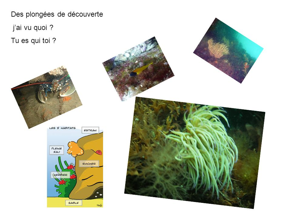 Des plongées de découverte