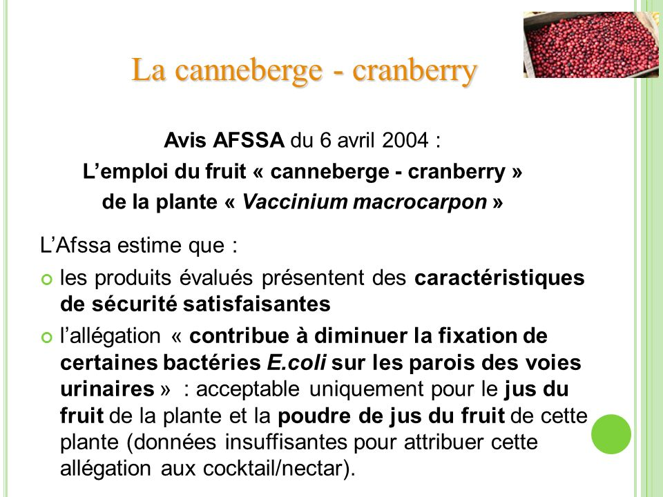 La canneberge - cranberry
