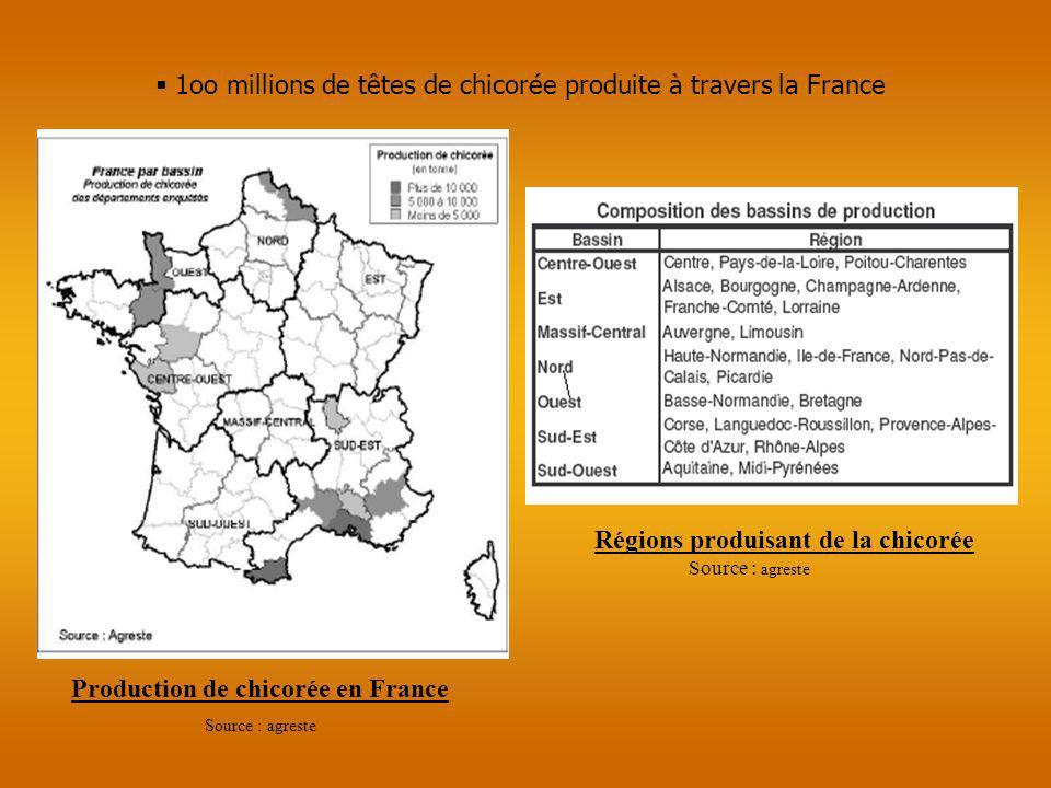 Production de chicorée en France