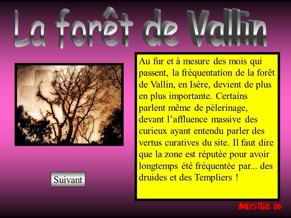La forêt de Vallin