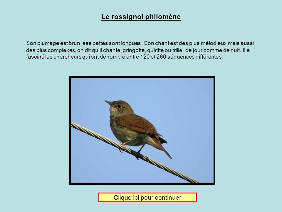 Le rossignol philomène