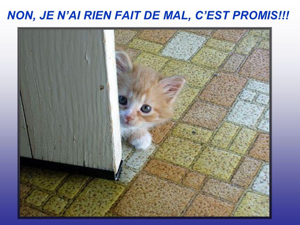 NON, JE N'AI RIEN FAIT DE MAL, C'EST PROMIS!!!
