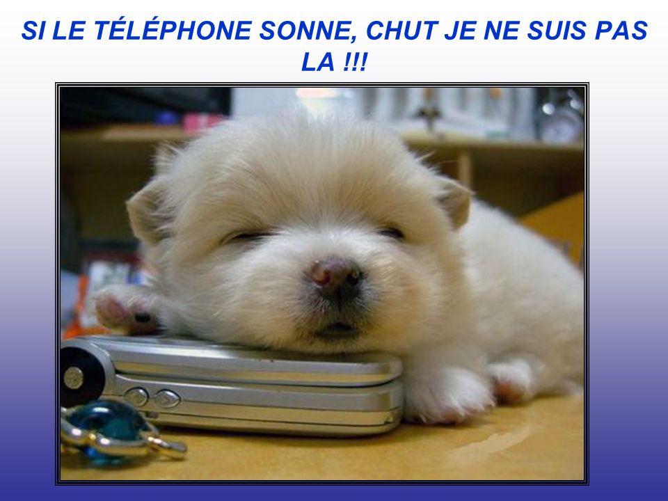 SI LE TÉLÉPHONE SONNE, CHUT JE NE SUIS PAS LA !!!