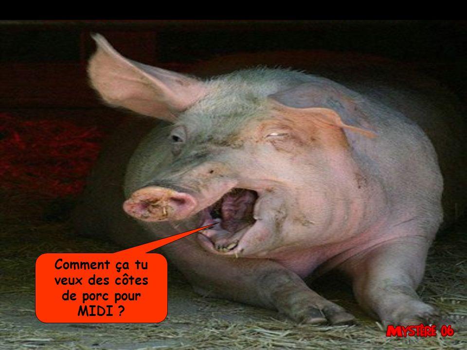 Comment ça tu veux des côtes de porc pour MIDI 15