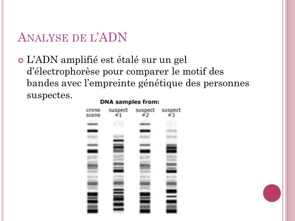 Analyse de l'ADN