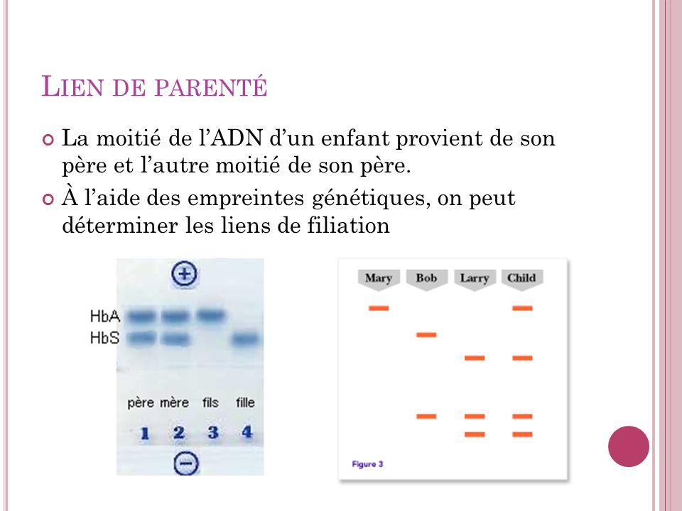 Lien de parenté La moitié de l'ADN d'un enfant provient de son père et l'autre moitié de son père.