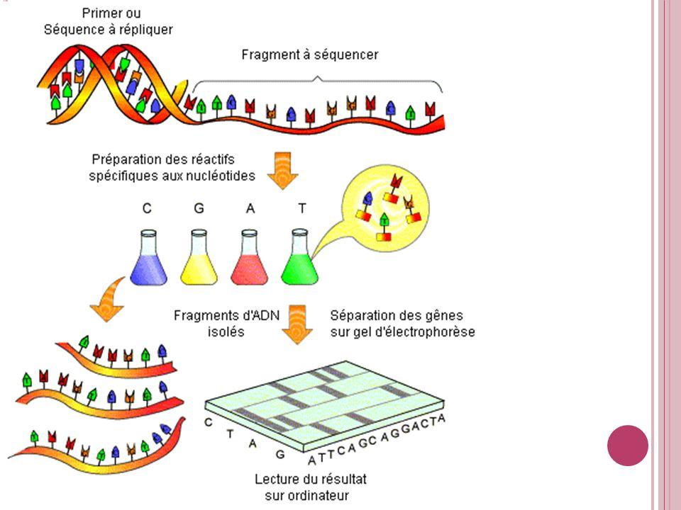 Cible et isole un segment d'ADN à séquencer