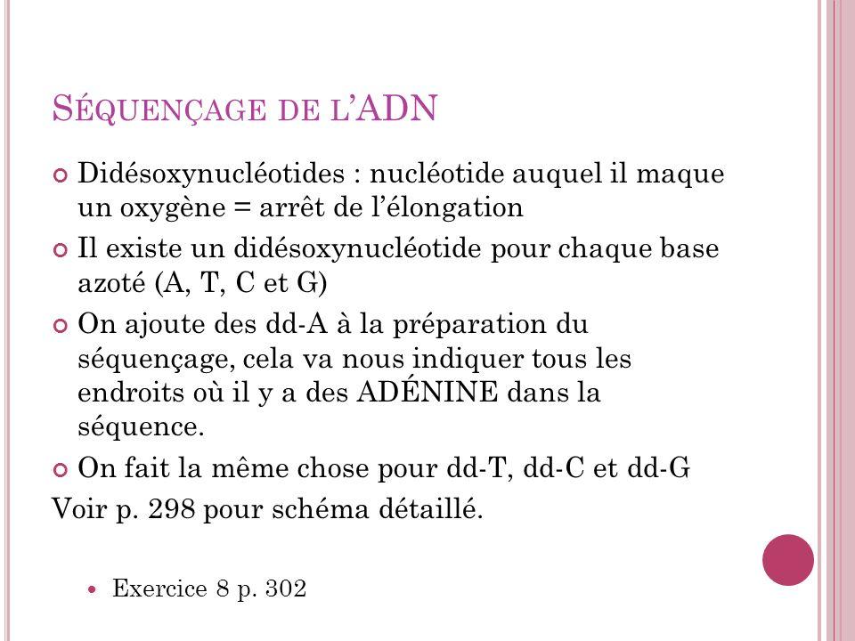 Séquençage de l'ADN Didésoxynucléotides : nucléotide auquel il maque un oxygène = arrêt de l'élongation.
