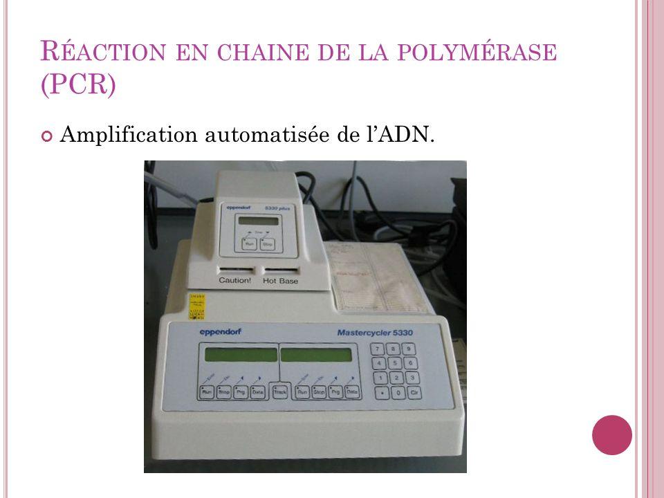 Réaction en chaine de la polymérase (PCR)