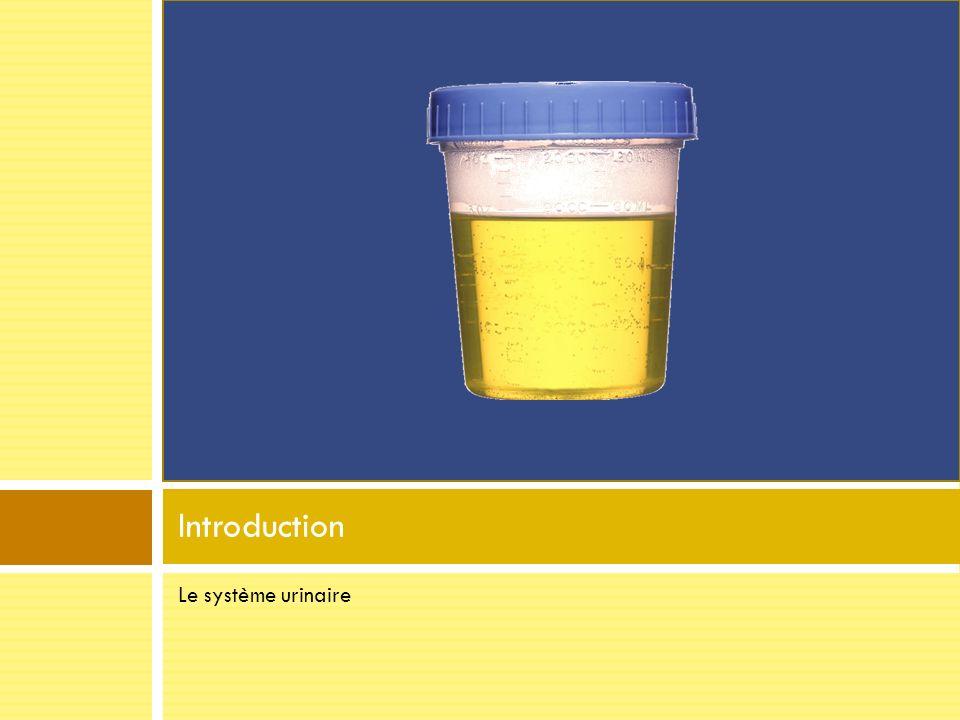 Introduction Le système urinaire