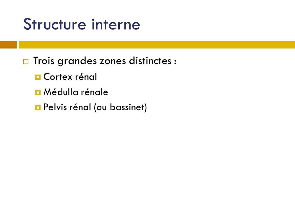 Structure interne Trois grandes zones distinctes : Cortex rénal