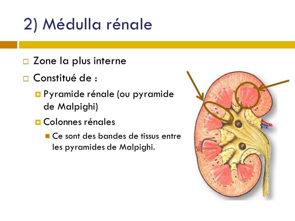 2) Médulla rénale Zone la plus interne Constitué de :
