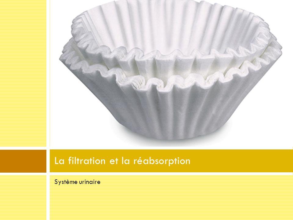La filtration et la réabsorption