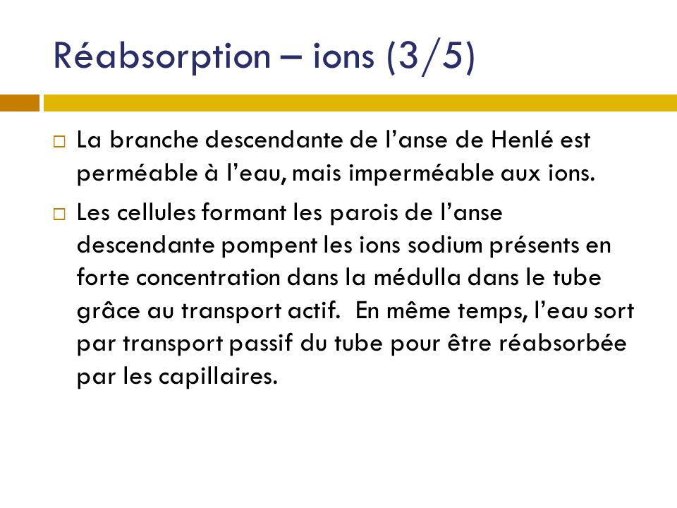 Réabsorption – ions (3/5)