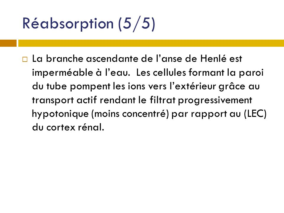 Réabsorption (5/5)