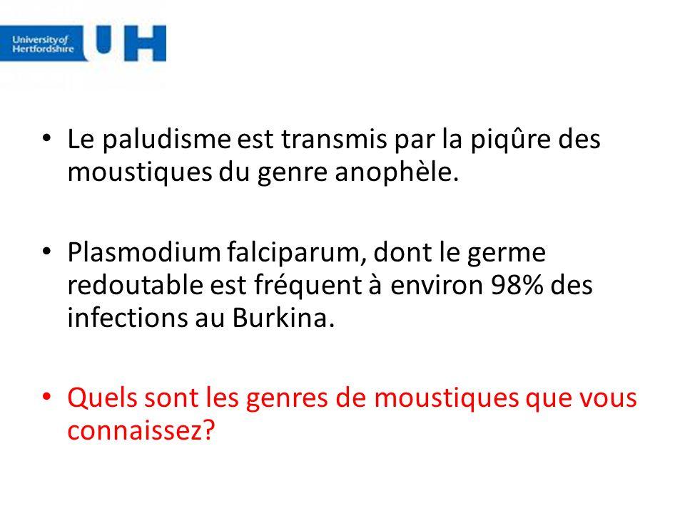 Le paludisme est transmis par la piqûre des moustiques du genre anophèle.