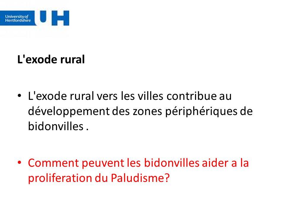L exode rural L exode rural vers les villes contribue au développement des zones périphériques de bidonvilles .
