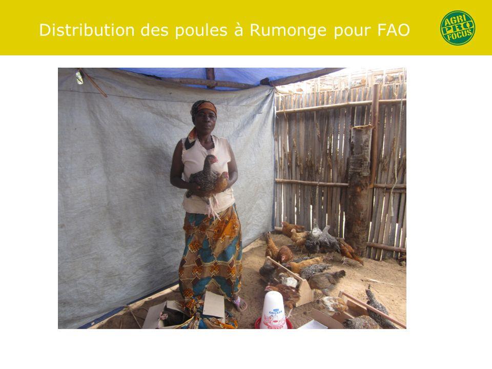 Distribution des poules à Rumonge pour FAO