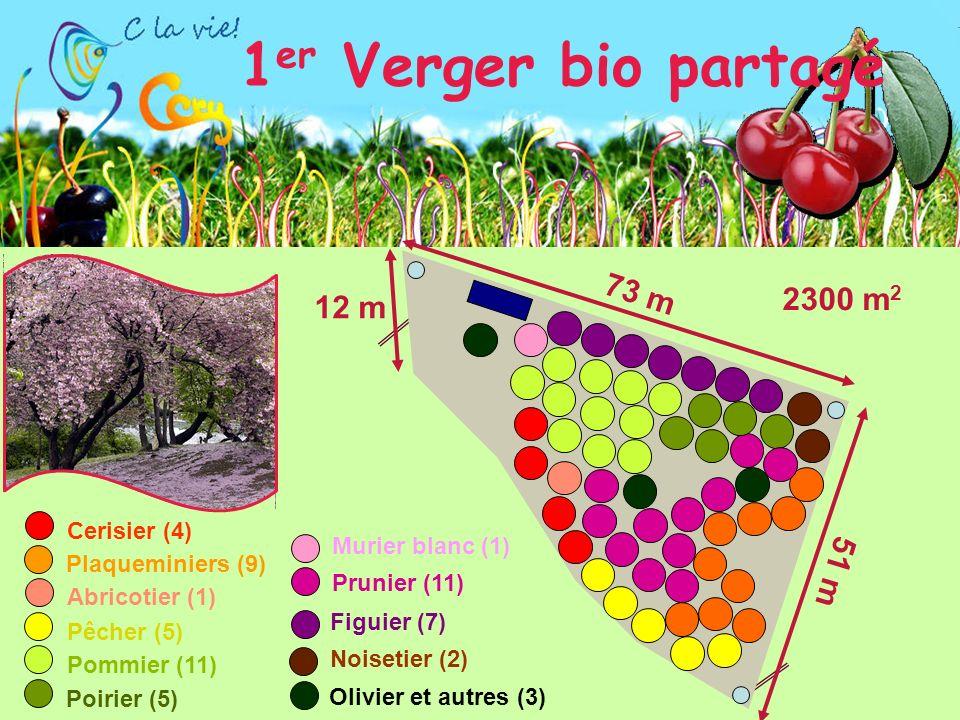 1er Verger bio partagé 73 m 2300 m2 12 m 51 m Cerisier (4)