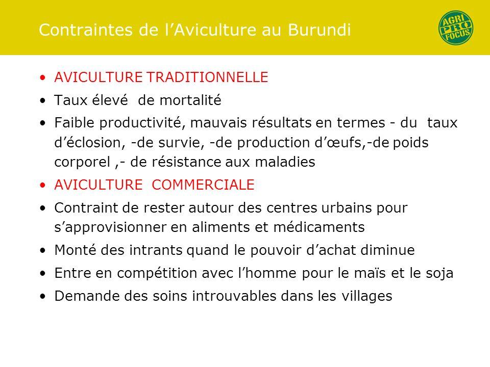 Contraintes de l'Aviculture au Burundi
