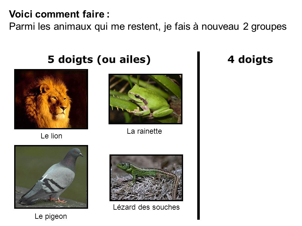 5 doigts (ou ailes) 4 doigts