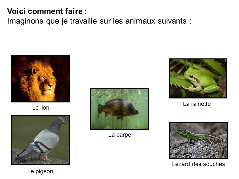 Imaginons que je travaille sur les animaux suivants :