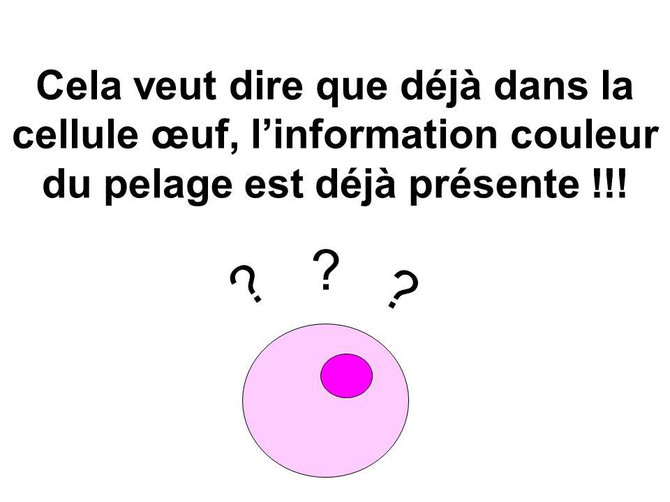 Cela veut dire que déjà dans la cellule œuf, l'information couleur du pelage est déjà présente !!!