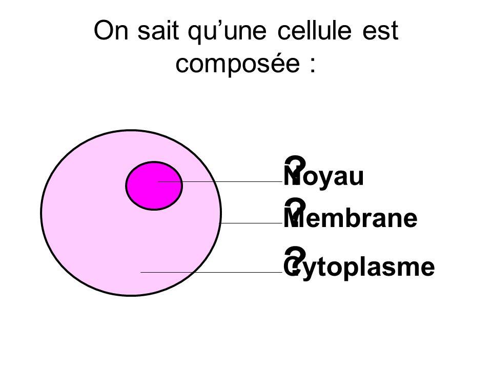 On sait qu'une cellule est composée :