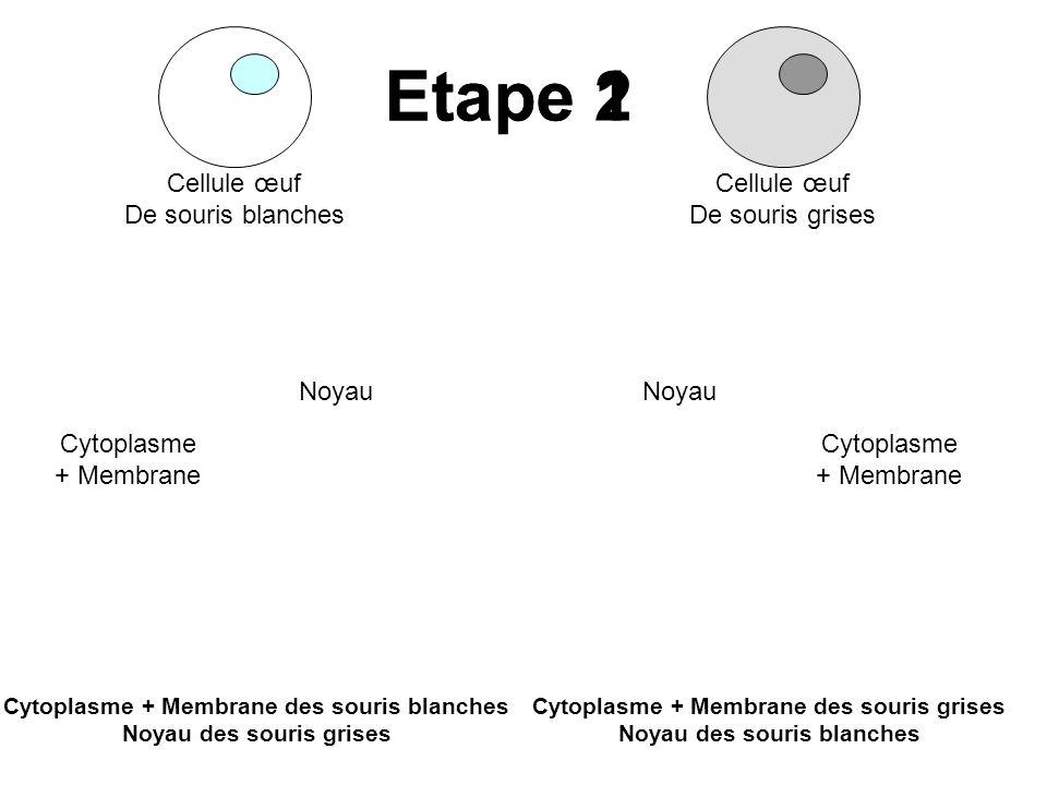 Etape 1 Etape 2 Cellule œuf De souris blanches Cellule œuf