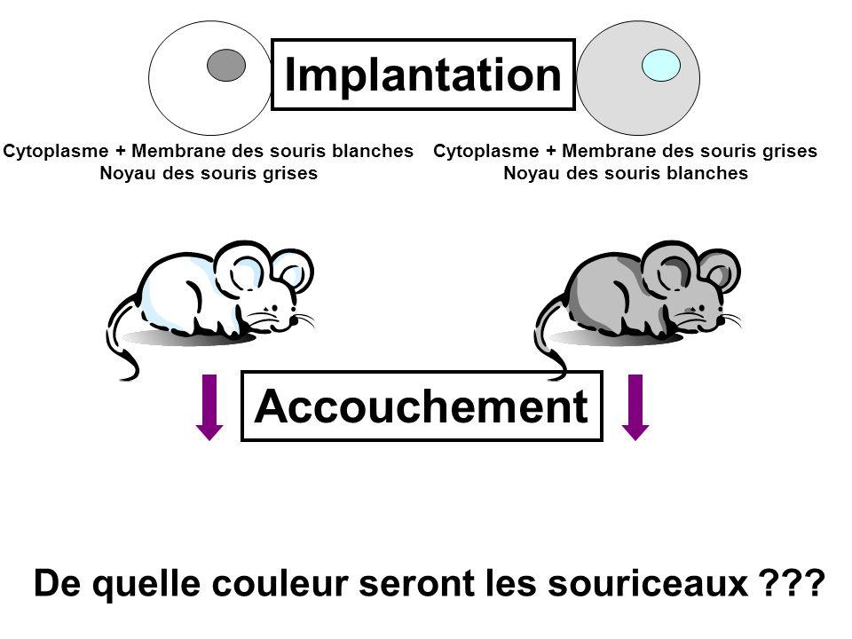 Implantation Accouchement