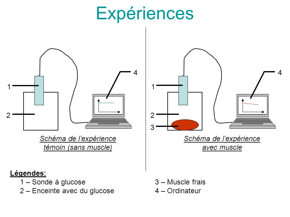 Expériences Schéma de l'expérience témoin (sans muscle) 1 2 4