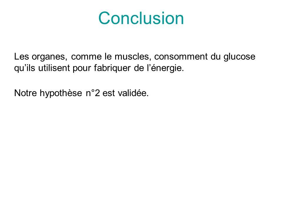 Conclusion Les organes, comme le muscles, consomment du glucose qu'ils utilisent pour fabriquer de l'énergie.