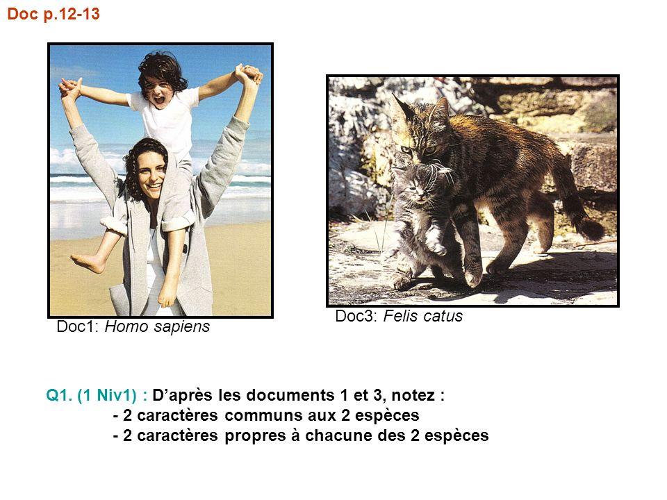 Doc p.12-13 Doc3: Felis catus. Doc1: Homo sapiens. Q1. (1 Niv1) : D'après les documents 1 et 3, notez :