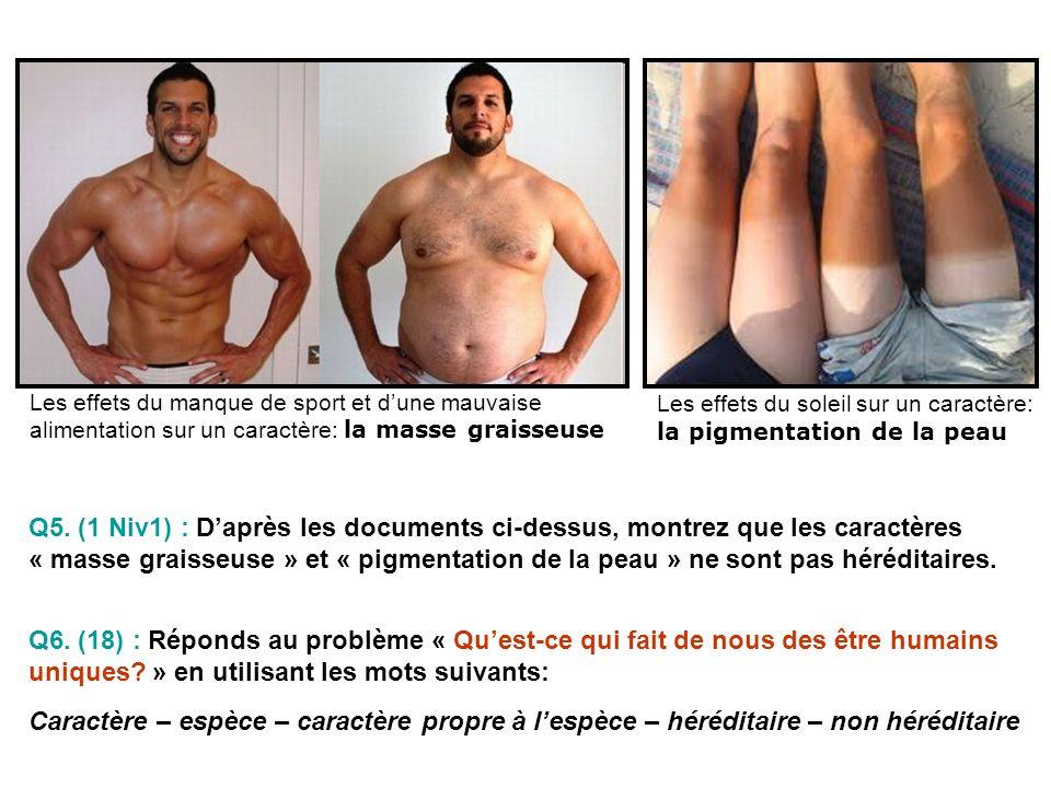 Les effets du manque de sport et d'une mauvaise alimentation sur un caractère: la masse graisseuse