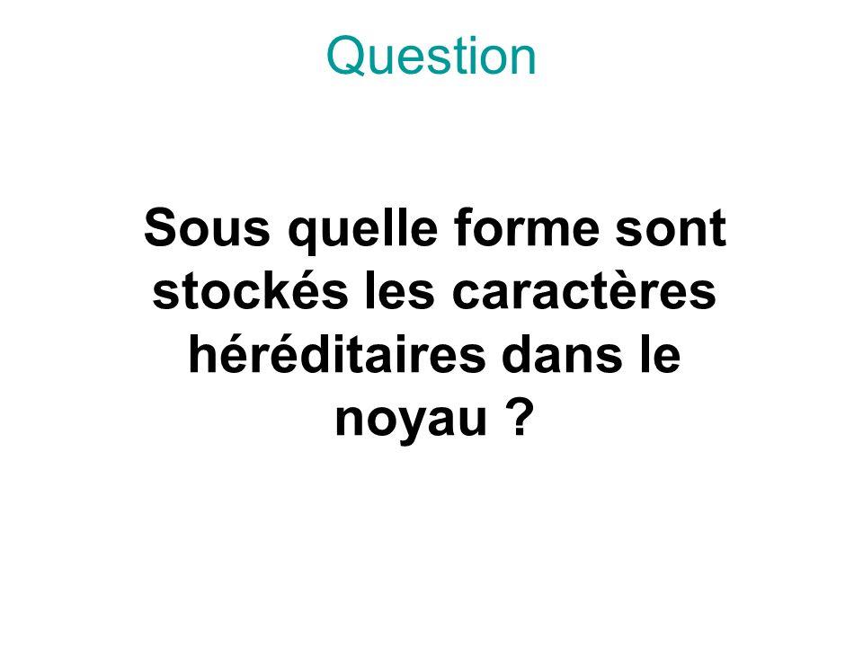 Question Sous quelle forme sont stockés les caractères héréditaires dans le noyau
