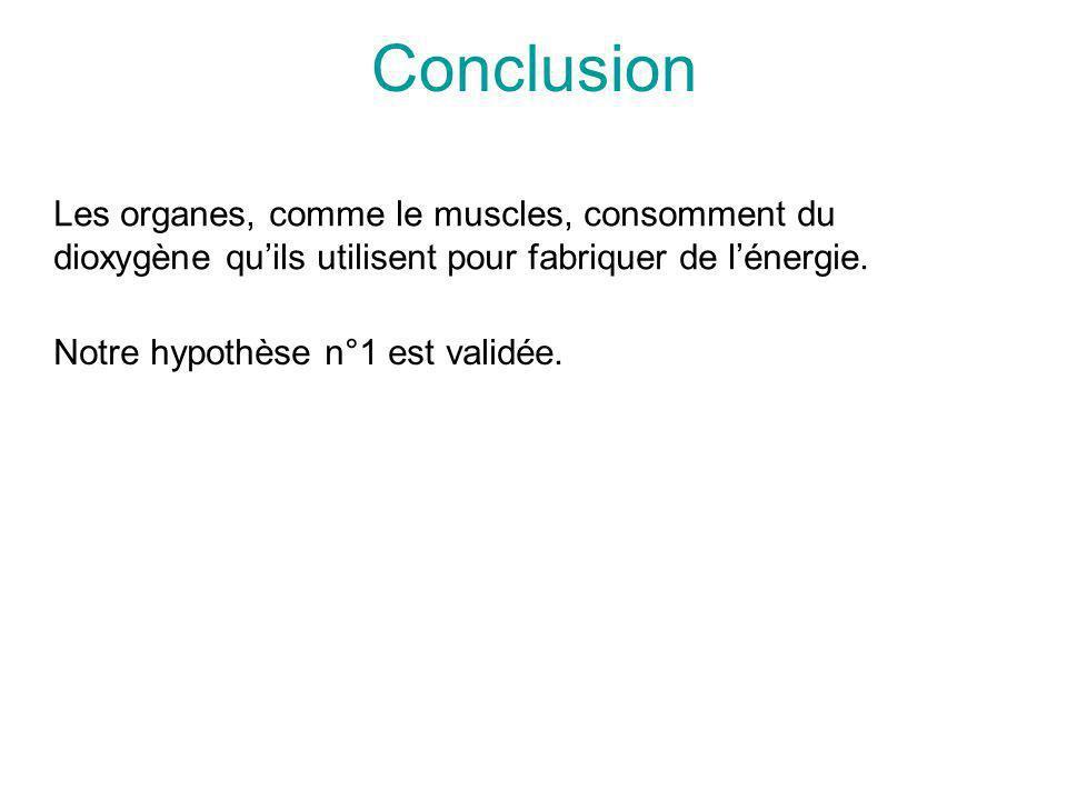 Conclusion Les organes, comme le muscles, consomment du dioxygène qu'ils utilisent pour fabriquer de l'énergie.