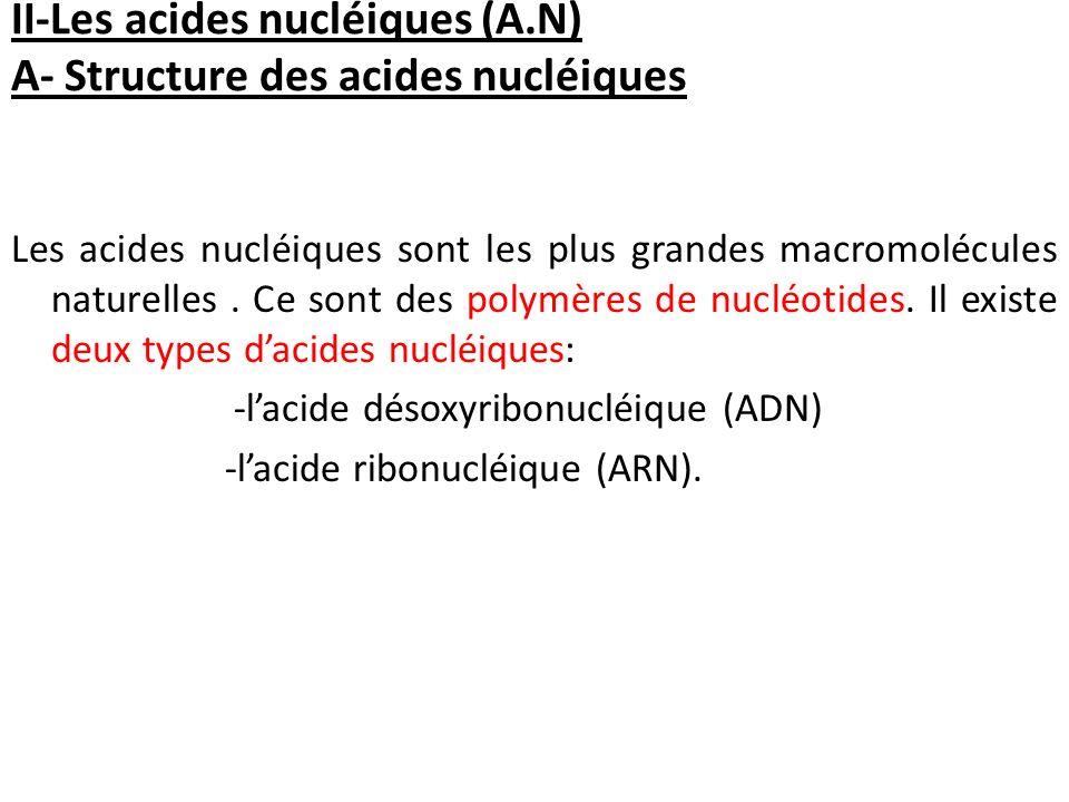 II-Les acides nucléiques (A.N) A- Structure des acides nucléiques
