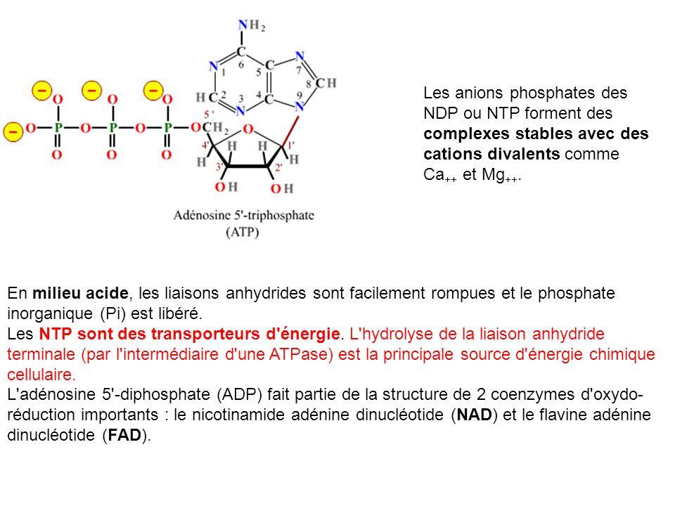 Les anions phosphates des NDP ou NTP forment des complexes stables avec des cations divalents comme Ca++ et Mg++.