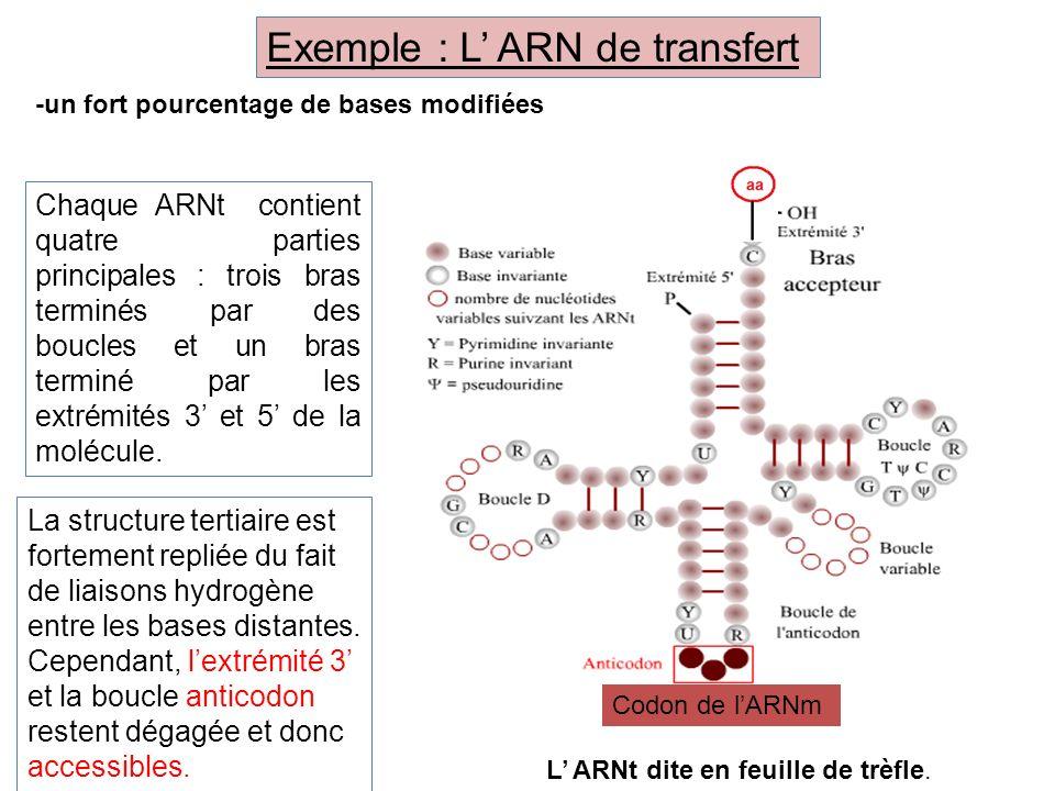 Exemple : L' ARN de transfert