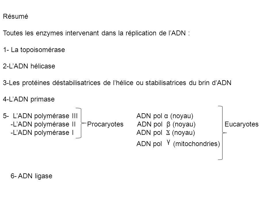 Résumé Toutes les enzymes intervenant dans la réplication de l'ADN : 1- La topoisomérase. 2-L'ADN hélicase.