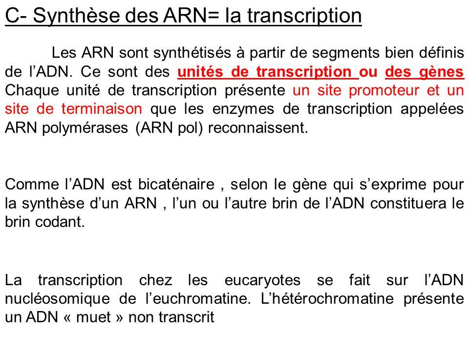 C- Synthèse des ARN= la transcription