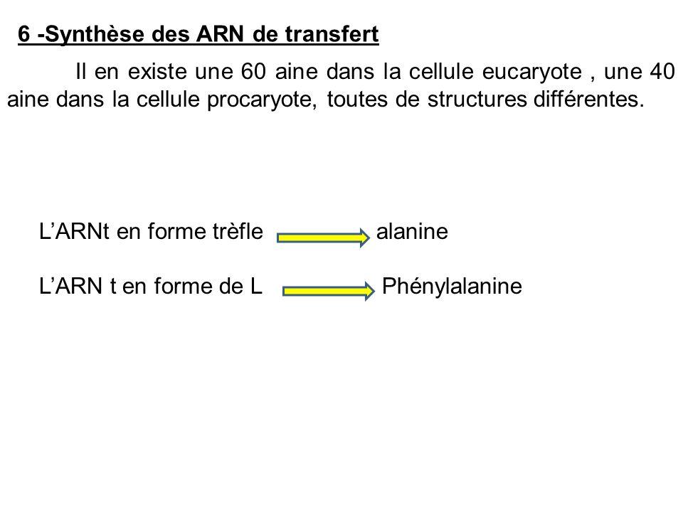 6 -Synthèse des ARN de transfert