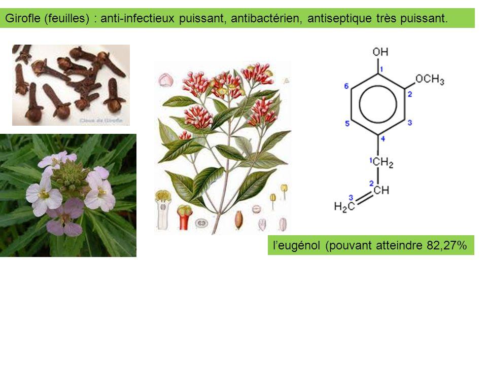 Girofle (feuilles) : anti-infectieux puissant, antibactérien, antiseptique très puissant.