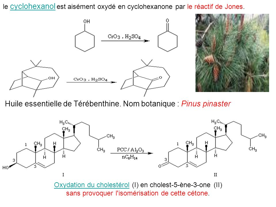 Huile essentielle de Térébenthine. Nom botanique : Pinus pinaster