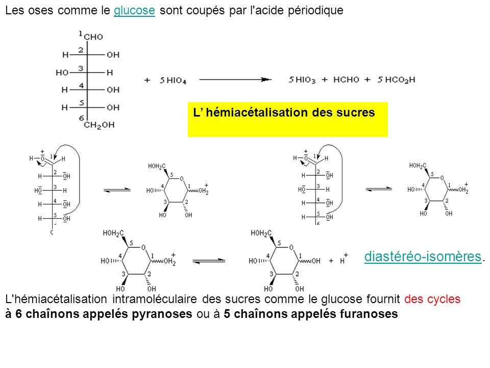 Les oses comme le glucose sont coupés par l acide périodique