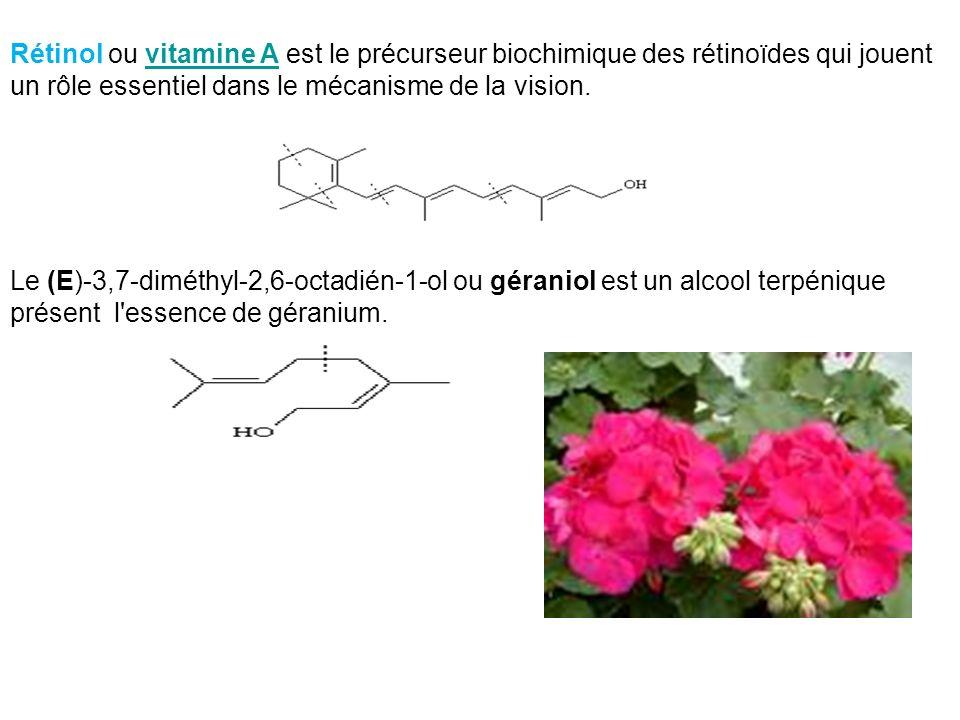 Rétinol ou vitamine A est le précurseur biochimique des rétinoïdes qui jouent un rôle essentiel dans le mécanisme de la vision.